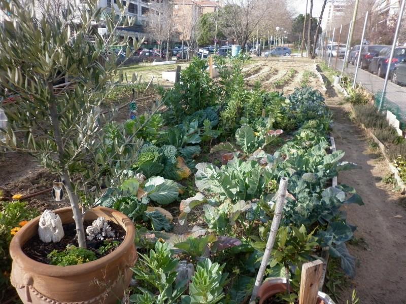 Adjudicadas las obras de adecuación de las 17 parcelas destinadas a huertos urbanos comunitarios de Madrid
