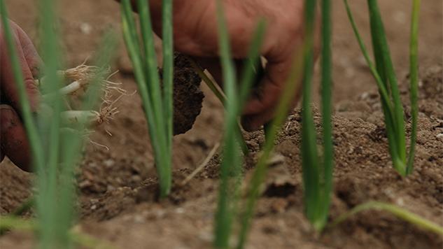 De Madrid al suelo: la emergencia de la agricultura urbana