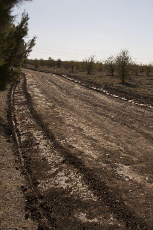 El Ayuntamiento de Coslada, cómplice de un nuevo atentado ecológico en el Bosque del Humedal