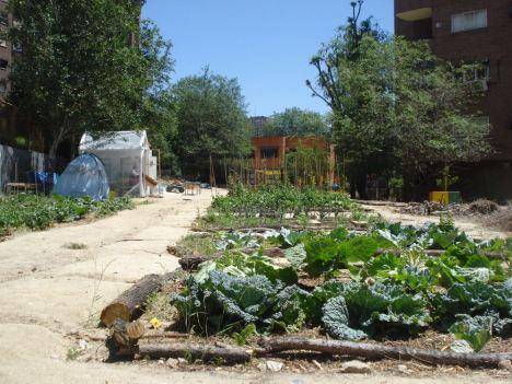 El Ayuntamiento de Madrid autoriza el uso de cinco nuevos huertos comunitarios