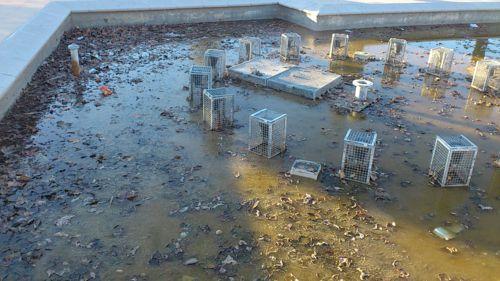 La AV PAU de Vallecas denuncia problemas de convivencia agravados por la inacción del IVIMA y de la EMVS