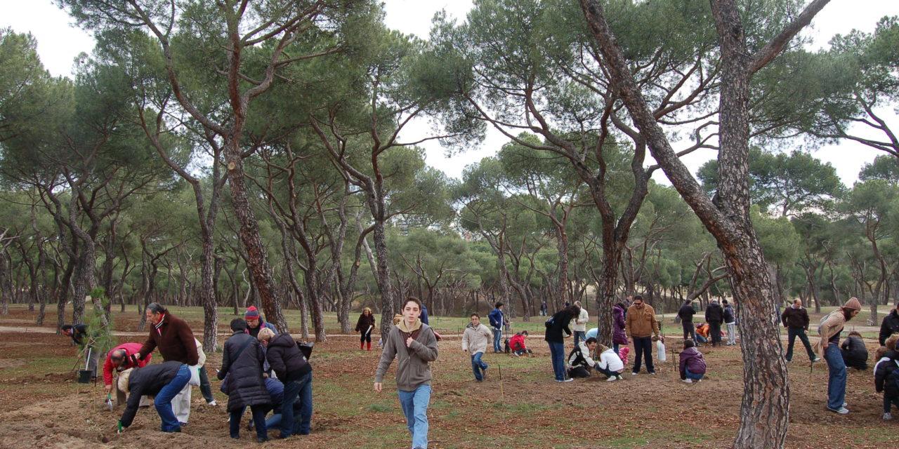 La Dehesa de la Villa suma 350 encinas y pinos piñoneros