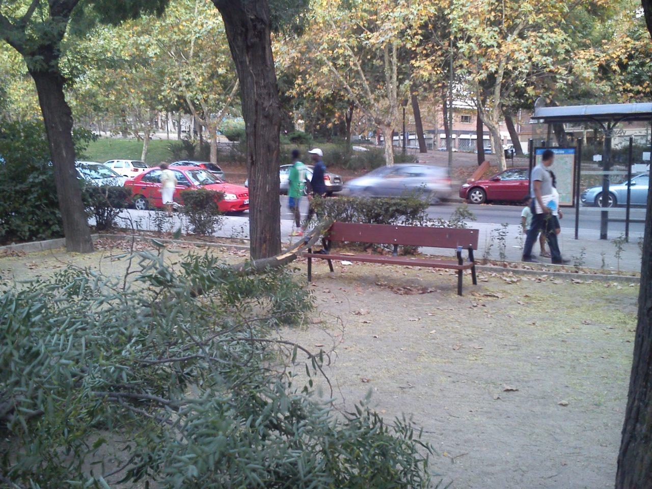 La FRAVM denuncia la negligencia del Ayuntamiento en el mantenimiento del arbolado