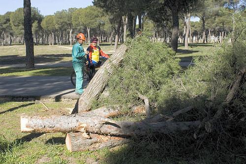 Los vecinos denuncian una tala indiscriminada de árboles centenarios en el PAU de Carabanchel