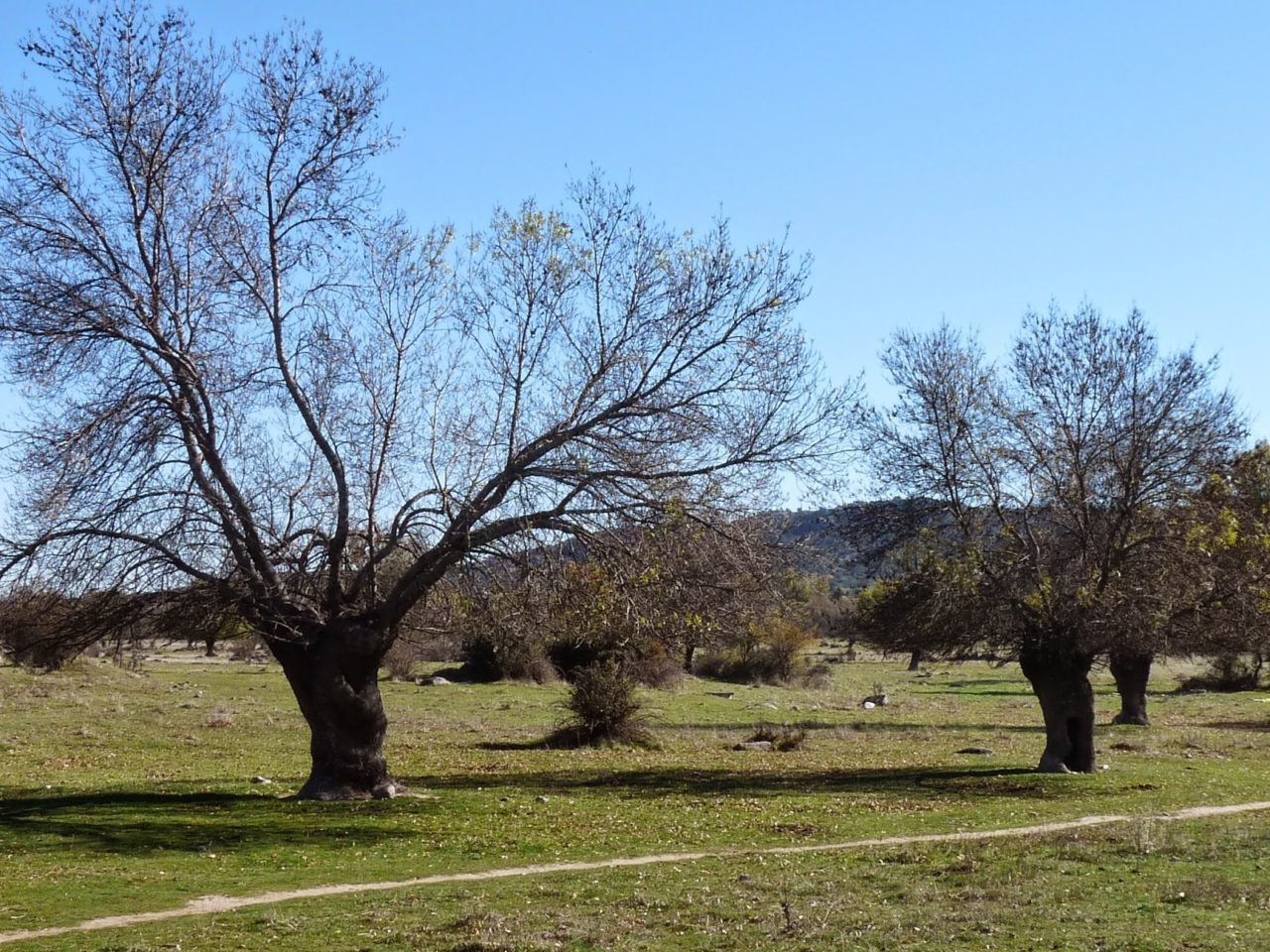 """Moralzarzal contra el campo de golf """"rústico"""" que proyecta el Ayuntamiento de la localidad"""