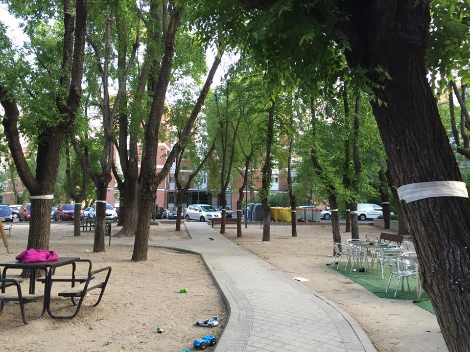 Objetivo: salvar los árboles de San Juan Bautista