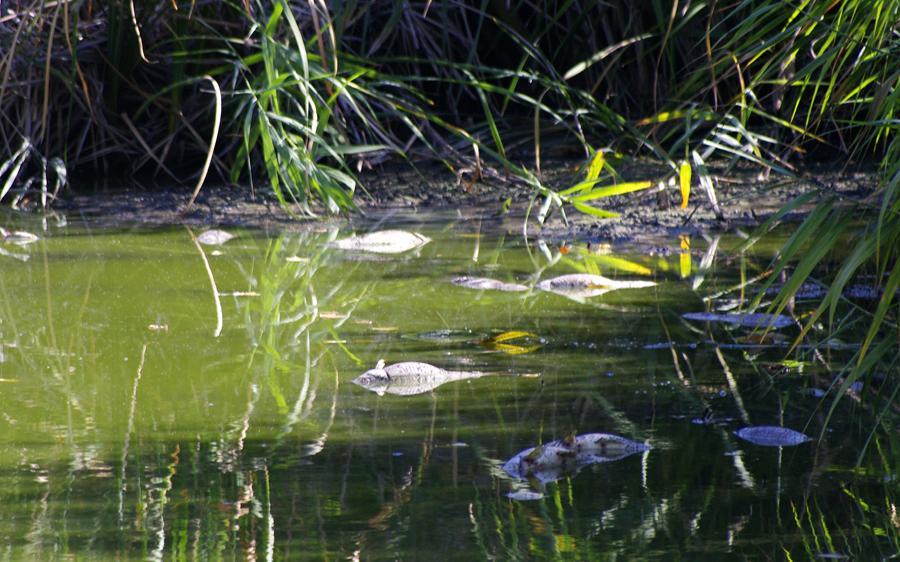 Peligra el ecosistema del humedal protegido de las Islillas de Mejorada del Campo