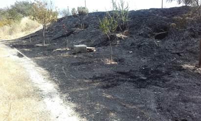 Se incendia el Parque Manolito Gafotas de Carabanchel tras llevar dos años sin desbrozar