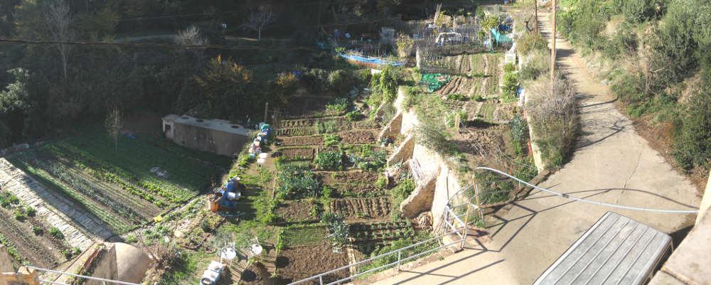 <i>El escarabajo verde</i> cuenta la historia de los huertos comunitarios de Can Masdeu