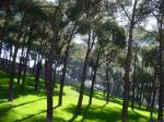 La FRAVM se adhiere al manifiesto en defensa de los árboles de Madrid
