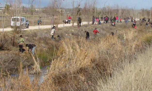 La Plataforma Valle del Henares se da a conocer con una plantación en el río Camarmilla
