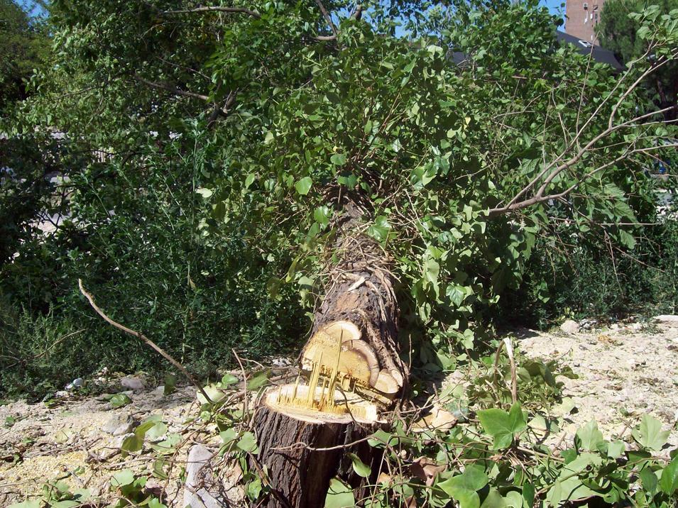 """Vecinos de la Alameda de Osuna se concentran esta tarde contra la tala de árboles en la """"Vía Verde de la Gasolina"""""""