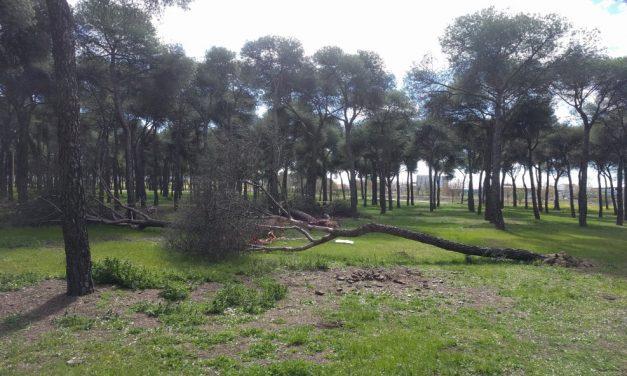 """La AV de Carabanchel Alto lleva al pleno de la junta una propuesta para que el Pinar de San José sea declarado """"Parque Histórico"""""""
