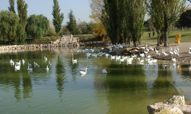 """""""El Soto no se toca"""": la ciudadanía de Móstoles protesta contra la celebración de un macro festival en el parque"""