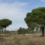 La construcción del mayor parque comercial de Madrid amenaza la supervivencia del Bosque del Humedal y el bienestar de la vecindad de Coslada