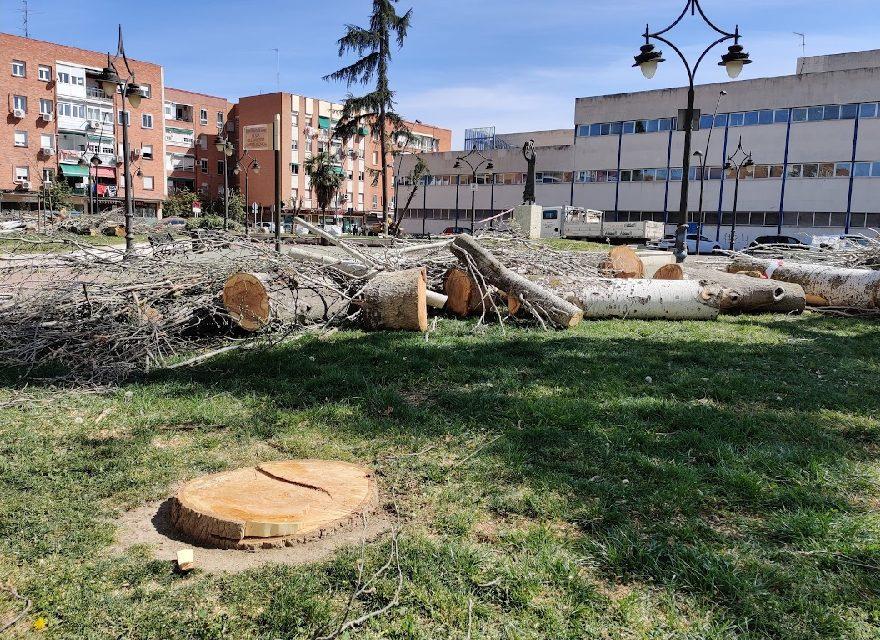 Colectivos vecinales y ecologistas ponen en marcha la Mesa del Árbol de Getafe