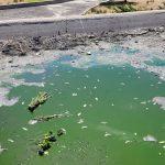 La dejación y el abandono del Parque de la Ría de Sanchinarro provocan la muerte de los animales alojados en sus aguas